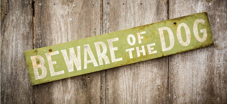 """Green sign reads """"Beware of the dog"""" on a wooden fence."""